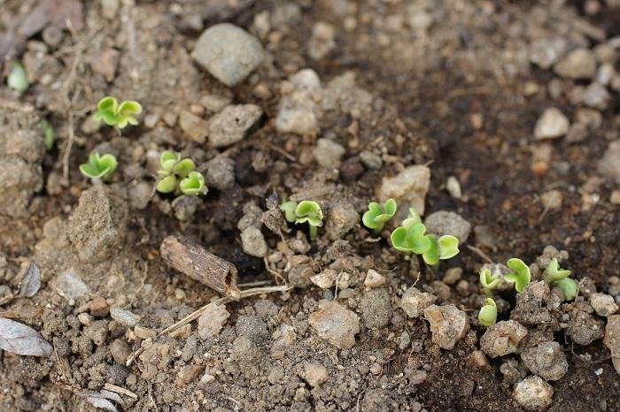 【身近なもので野菜の土作り】専用の土を使わなくても花や野菜を元気に育てるには?