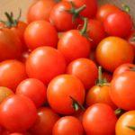 去年のトマト